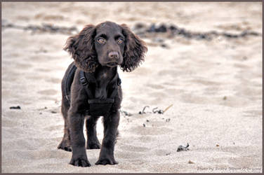 baby on the beach by brijome