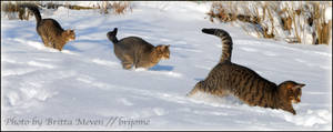 snowcat by brijome