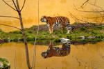 Tiger-Island