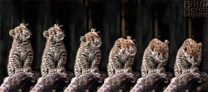 Leopard cub motion2