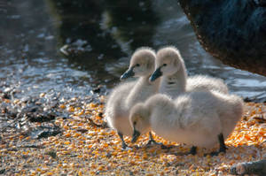 chick's by brijome