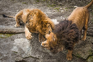Fight by brijome