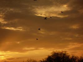 Birds Soar by Eno-Crux