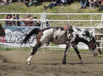 Rodeo Horse Stock 7