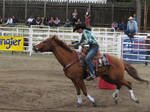 Rodeo Horse Stock 14