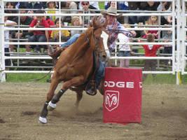 Rodeo Horse Stock 16 by horsecrazycool