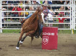 Rodeo Horse Stock 16