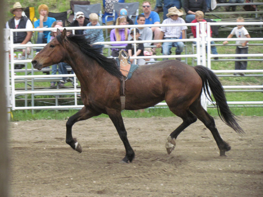 Rodeo Horse Stock 17 by horsecrazycool