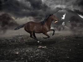 .:WAR HORSE:. by horsecrazycool