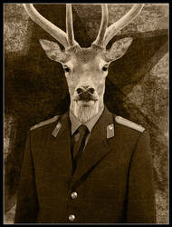 Old Buck by pixelpsycho