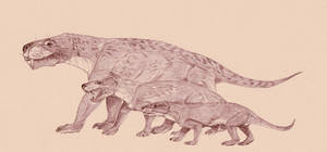Moschorhinus Oliveria Thrinaxo