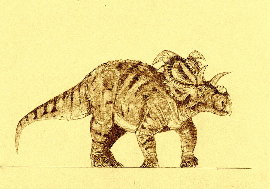 Medusaceratops by Kahless28
