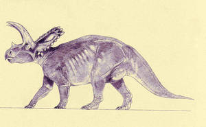 Coahuilaceratops by Kahless28