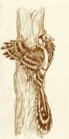 Dalingheornis liweii