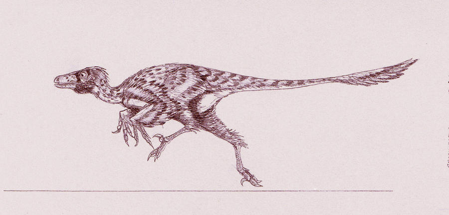 Graciliraptor lujiatunensis