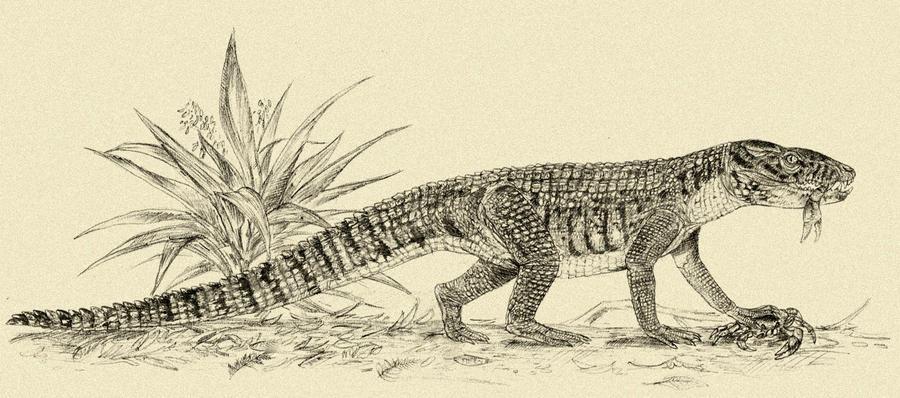 http://fc09.deviantart.net/fs70/i/2012/356/1/2/mekosuchus_inexpectatus_by_kahless28-d5osoa4.jpg