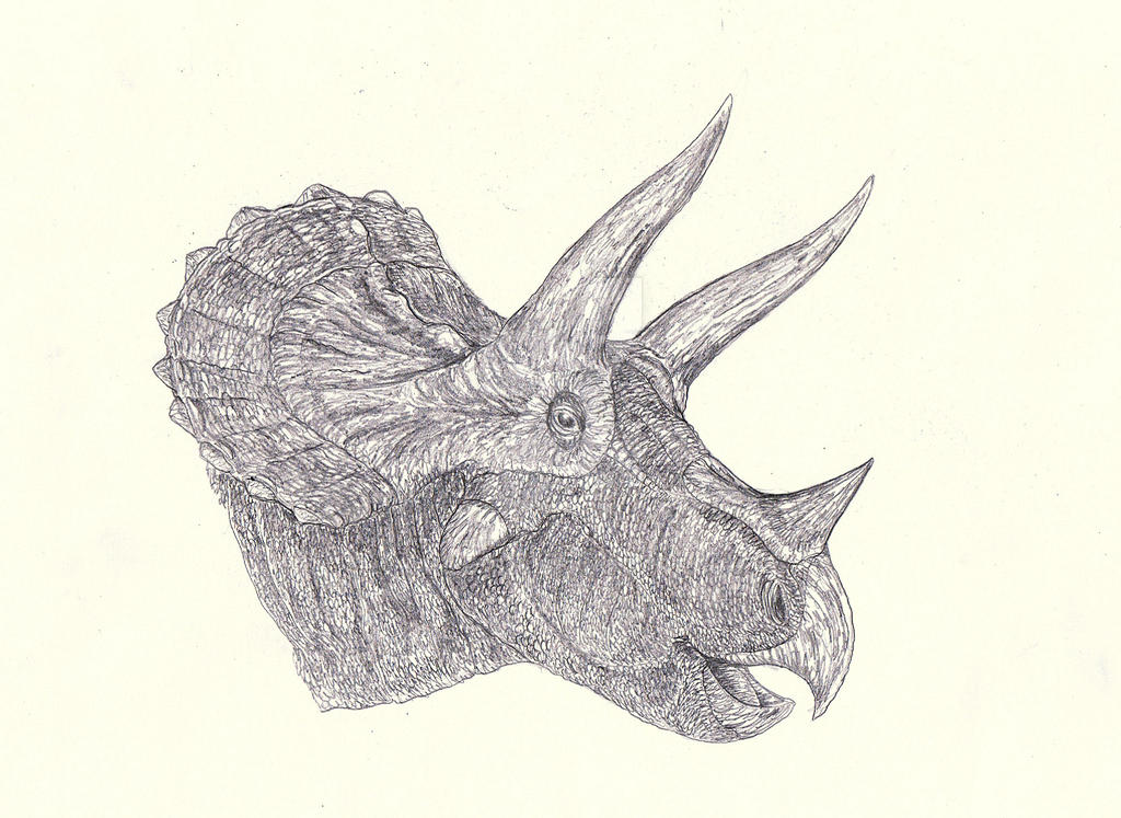 Triceratops 5 - YPM 1821 by Kahless28