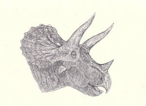 Triceratops 5 - YPM 1821