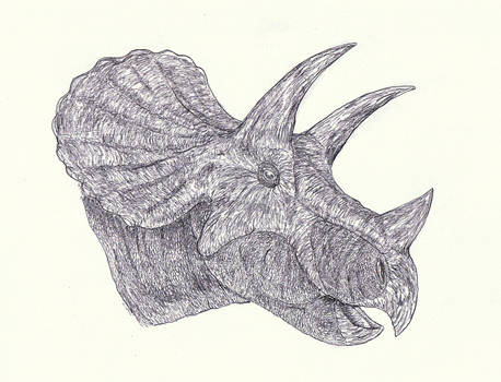 Triceratops 6