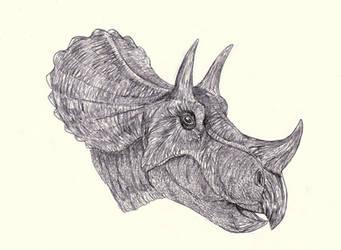 Tatankaceratops - Triceratops