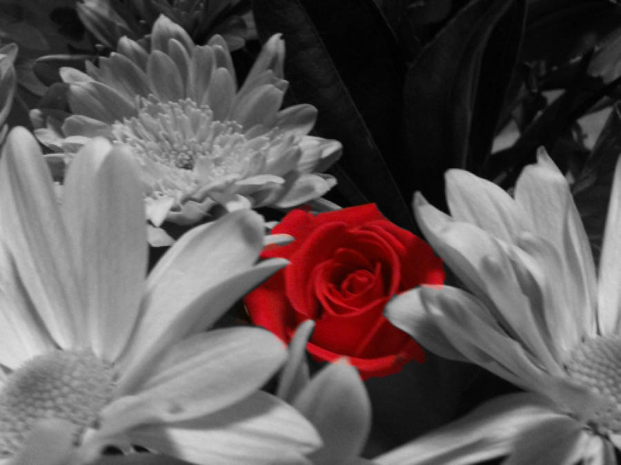 CVECE - Page 14 Only_red_rose_by_axelfan3303-d3a8n3x