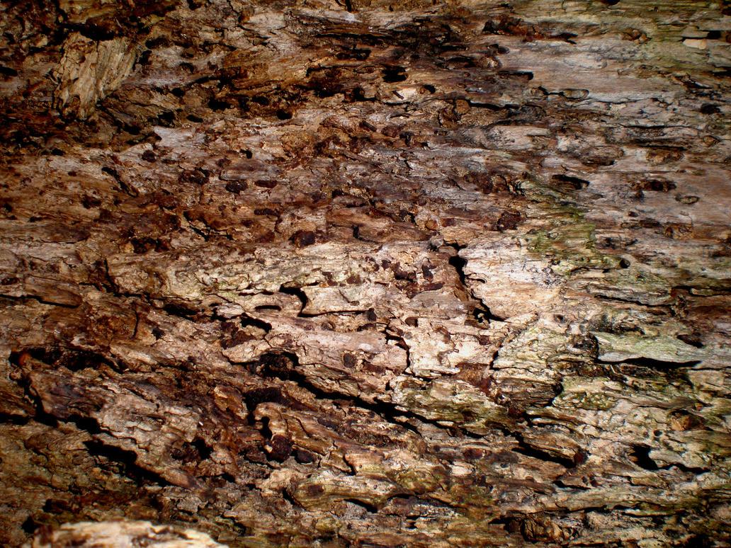 Dessicated Tree 2 by PariahRisingSTOCKS