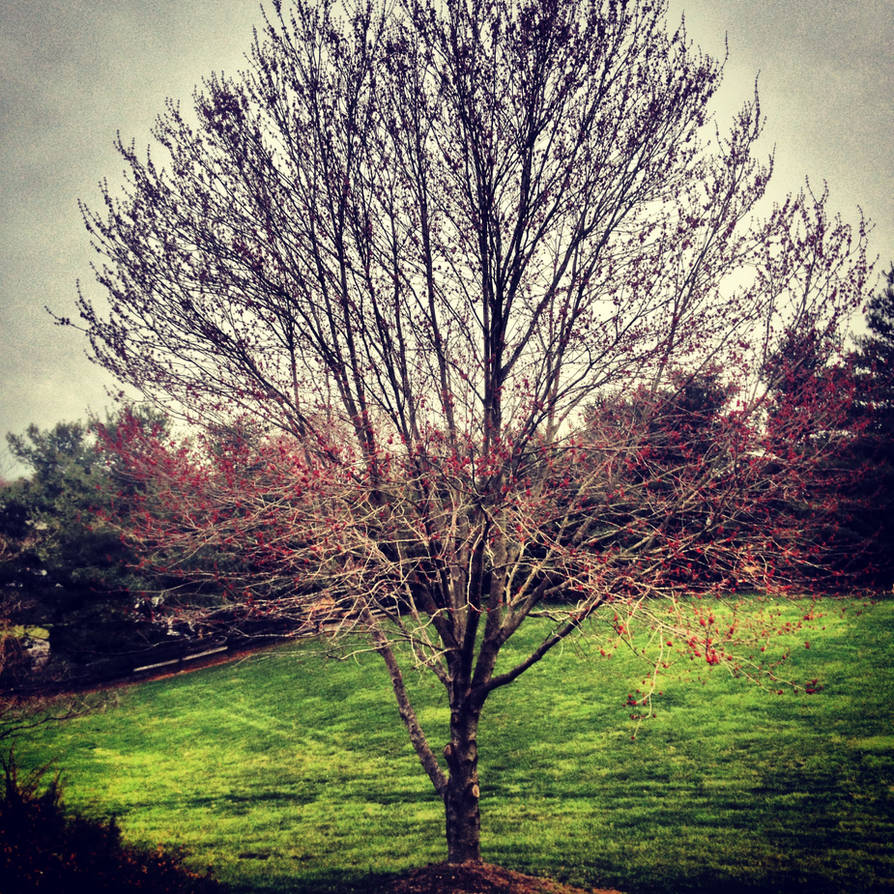 Spring has Sprung by ChemDiesel