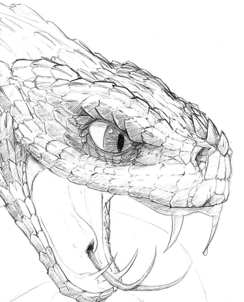 Detailed Line Drawings Of Animals : Snake head drawings car interior design