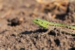 Green Hunter