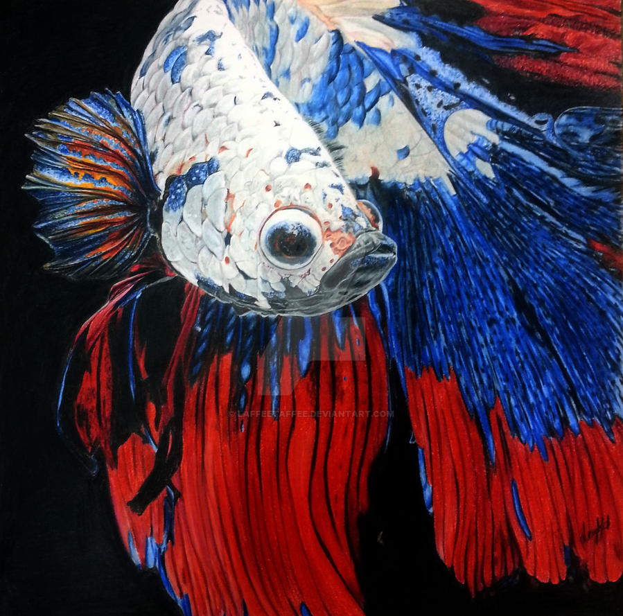 Betta Fish in Colored Pencils by Laffeetaffee on DeviantArt