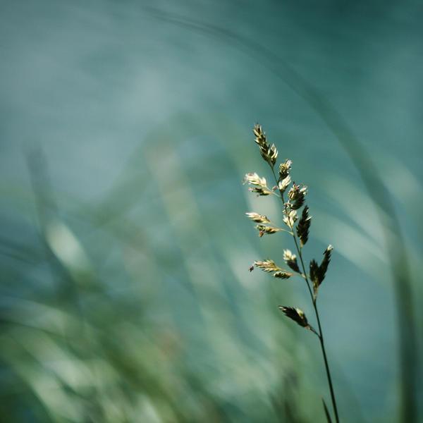 weed by mathias-erhart