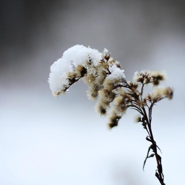 snow hat by mathias-erhart