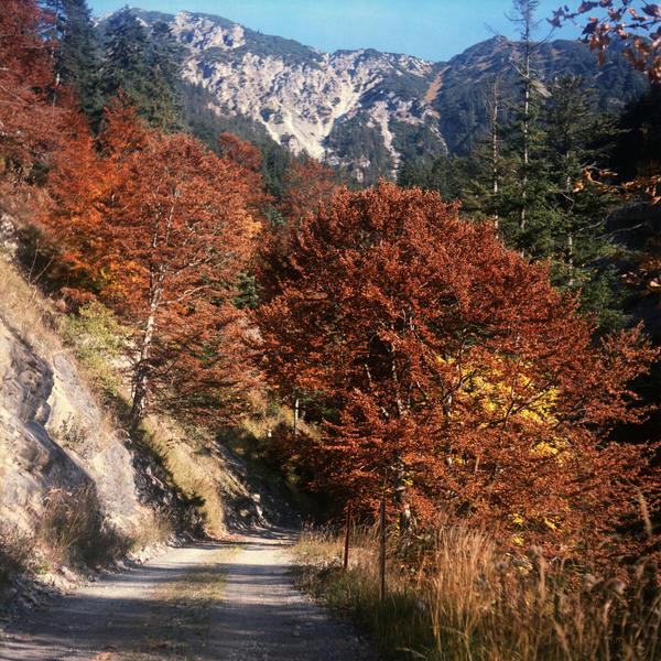 autumn wonderland by mathias-erhart