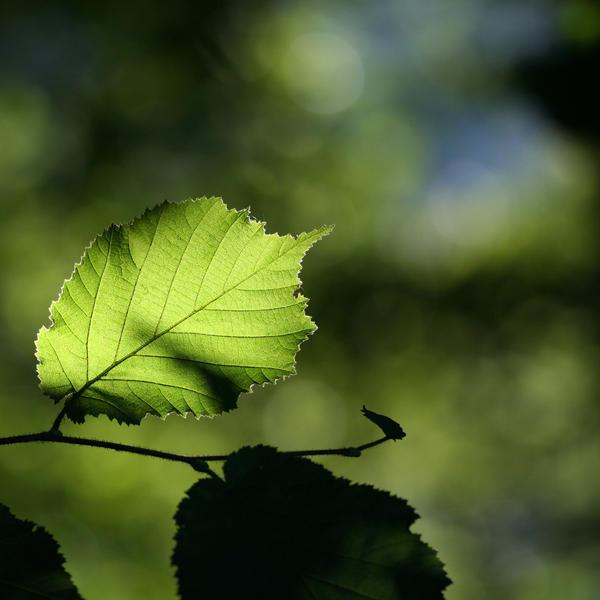 green leaf by mathias-erhart