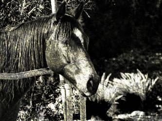 Dirt Trail- Horse by Fiction-Art-Author