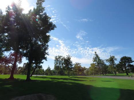 Irvine Regional Park- Greenery