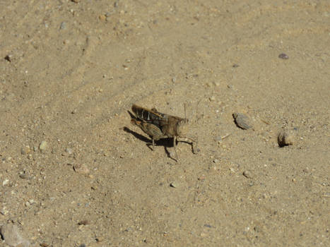 GrassHopper on Hiking Trail