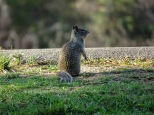 Squirrel Alerted