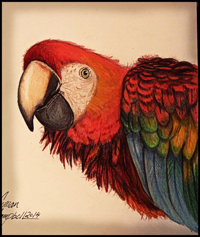 Scarlett Macaw by gilly15