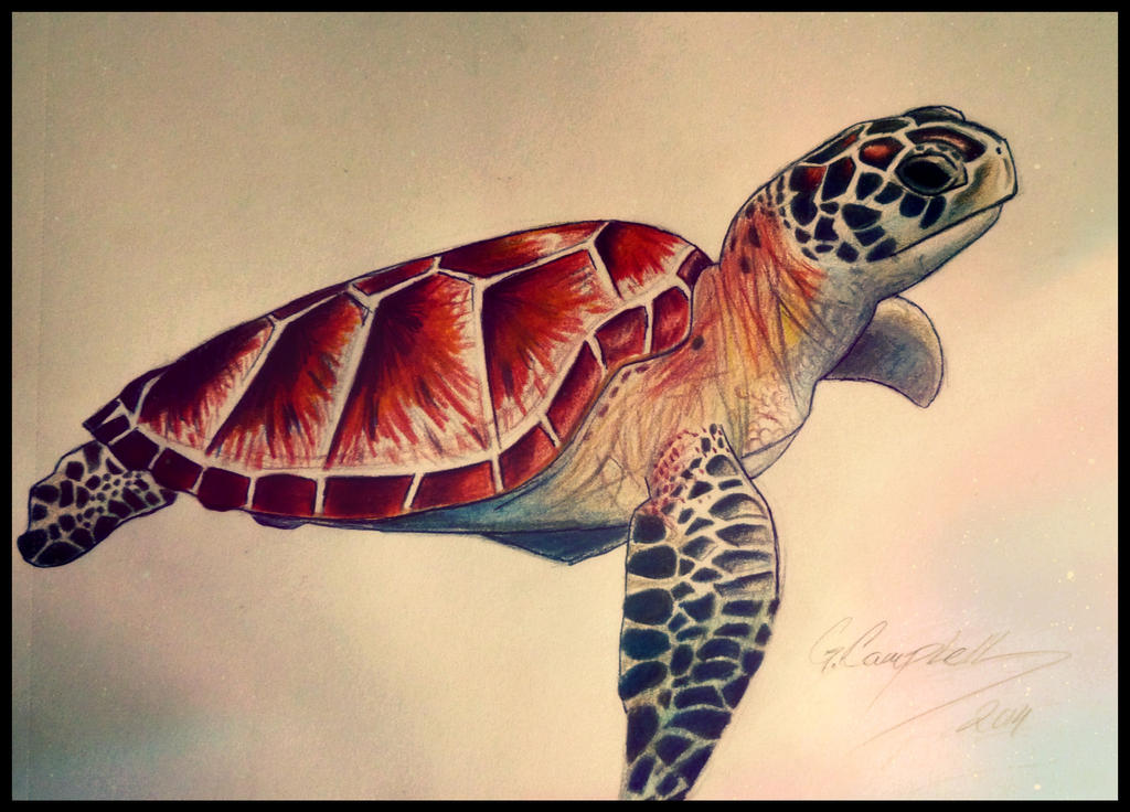 Sea Turtle by gilly15