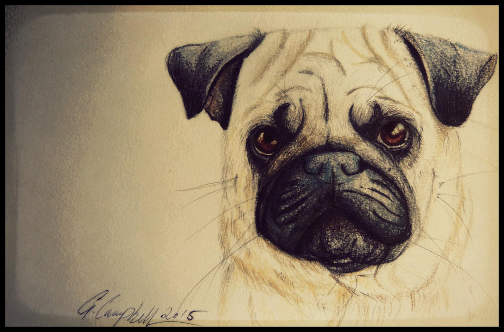 Pug by gilly15