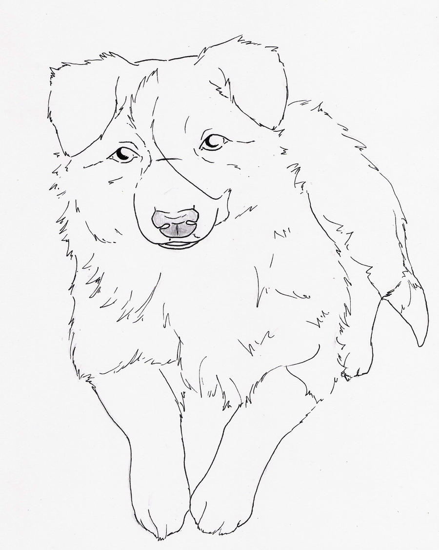 rough collie coloring pages - photo#24