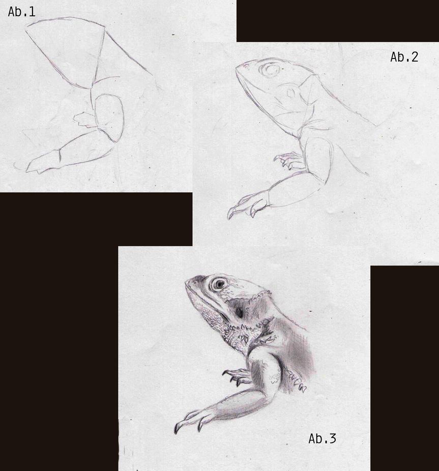 Gallery Gambar Yang Berhubungan Dengan How To Draw A Bearded Dragon