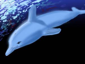 Dolphin V2