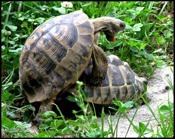 I turtley love you  Turtle Love Sayings