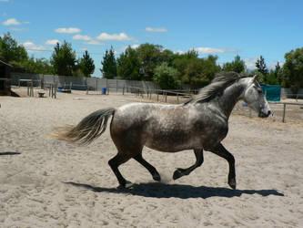 Horse stock 3 by Polar-Dream