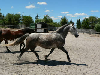 Horse stock 4 by Polar-Dream