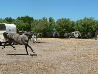 Horse stock 8 by Polar-Dream