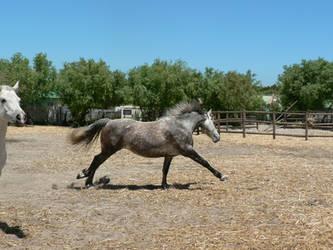 Horse stock 9 by Polar-Dream