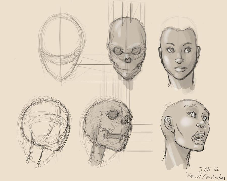 Facial Construction 19